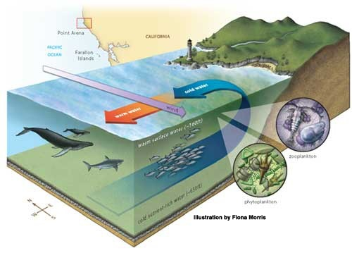 Upwelling and the california current ocean tracks upwelling image ccuart Gallery